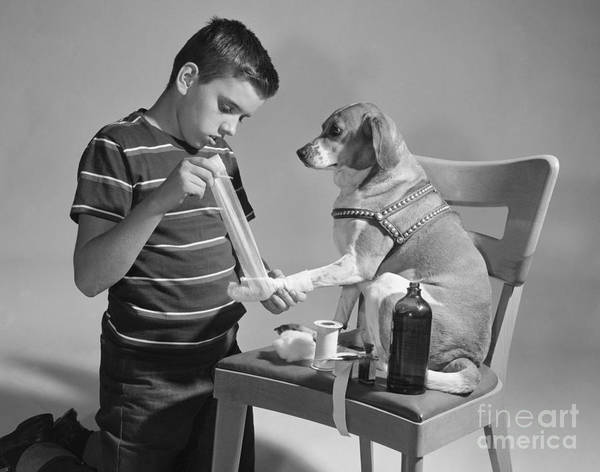 Dog Treat Photograph - Boy Bandaging Dogs Paw, C.1950s by Debrocke/ClassicStock