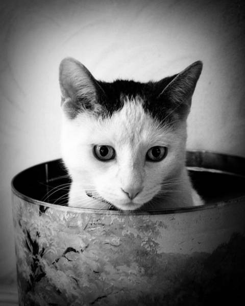 Cat Wall Art - Photograph - Boy George by Cabral Stock