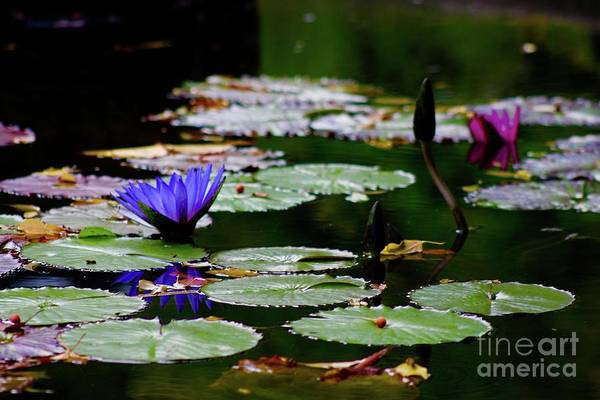 Wall Art - Photograph - Boy Or Girl Water Lily by Gregory E Dean