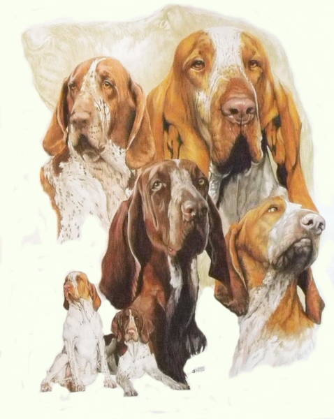 Wall Art - Mixed Media - Bracco Italiano Medley by Barbara Keith
