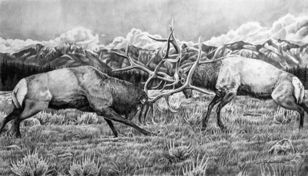 Bugling Drawing - Brace For Impact by Lydia Smith