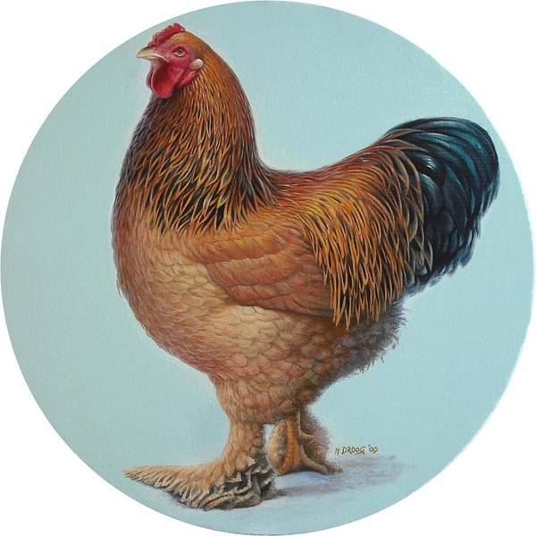 Painting - Brahma Rooster by Hans Droog