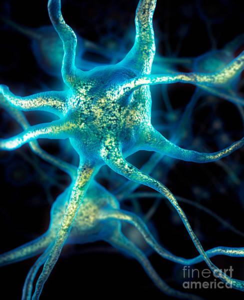 Neuron Wall Art - Photograph - Brain Cell Neurons by Maxim Images Prints
