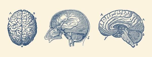 Nerves Drawing - Brain Diagram - Three Views - Vintage Anatomy Print by Vintage Anatomy Prints