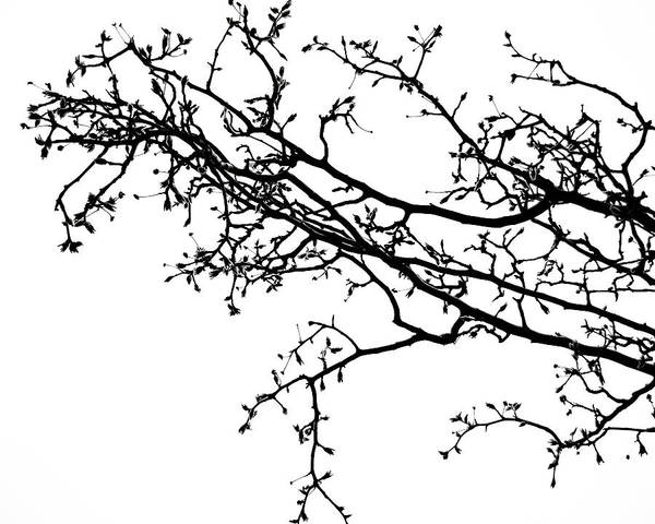 Wall Art - Photograph - Branch by Slade Roberts