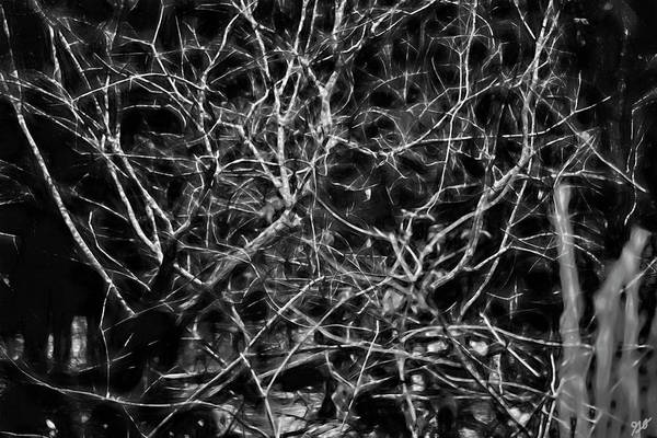 Photograph - Branched By Bayou by Gina O'Brien