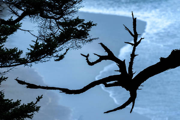 Photograph - Branches And Surf by Robert Potts