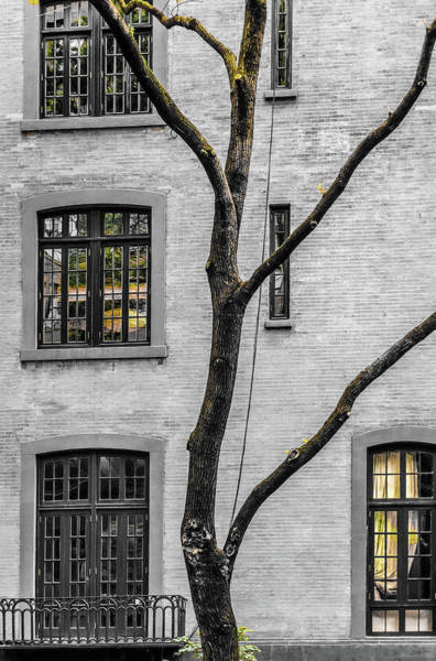 Photograph - Branches And Windows by Cate Franklyn