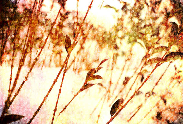 Wall Art - Digital Art - Branches by Antique Images