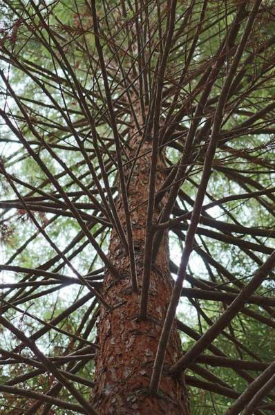 Photograph - Branches by Christy Pooschke