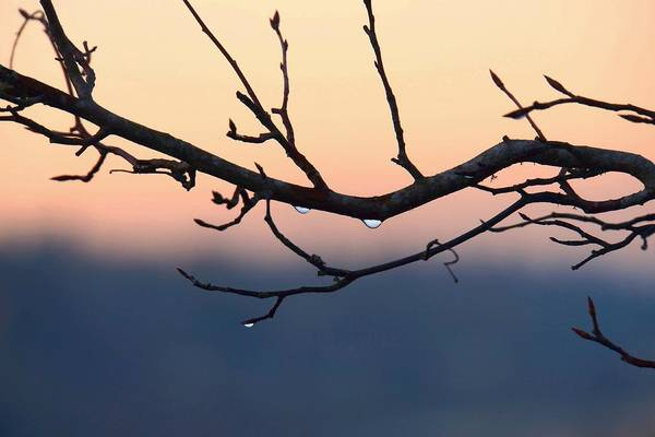 Photograph - Branches In Silhouette by Patricia Strand