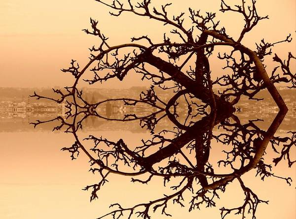 Branches In Suspension Art Print
