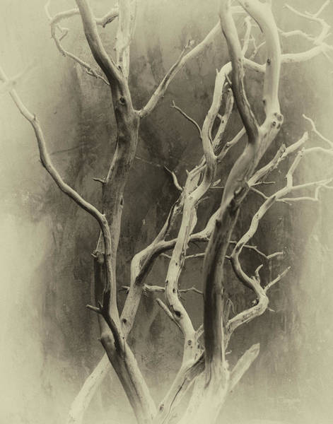 Photograph - Branches by Michael Raiman