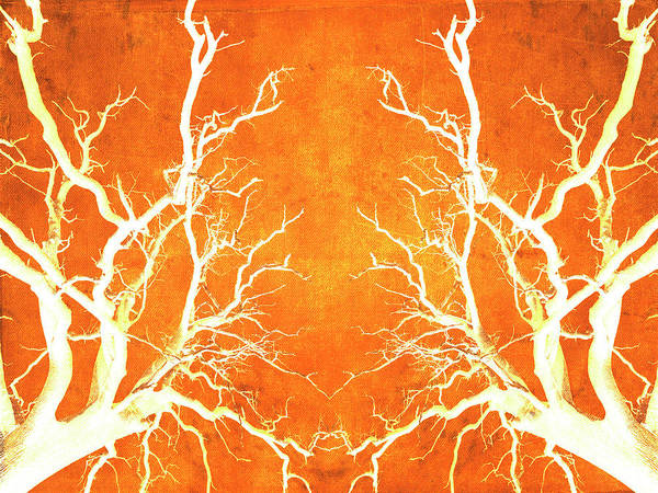 Photograph - Branches Of Fire Touch by John Williams