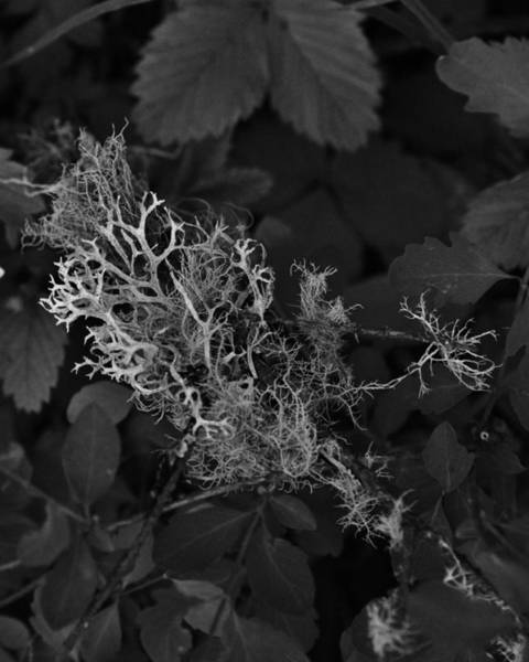 Photograph - Branches Of Life In The Forest by Charles Lucas