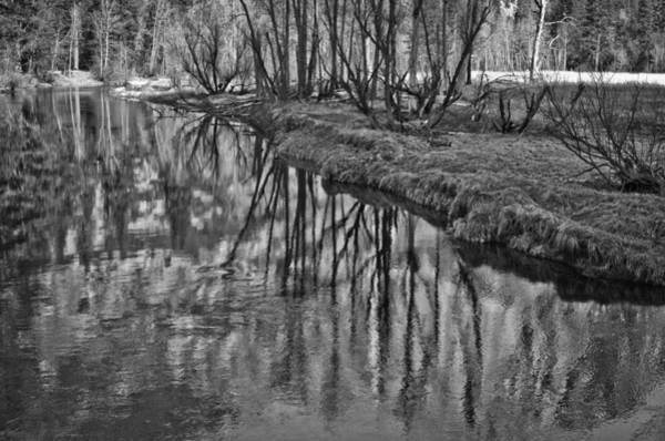 Photograph - Branches Reflected In Yosemite by Priya Ghose