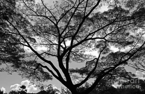 Photograph - Branching Out In Bw by Jennifer Robin