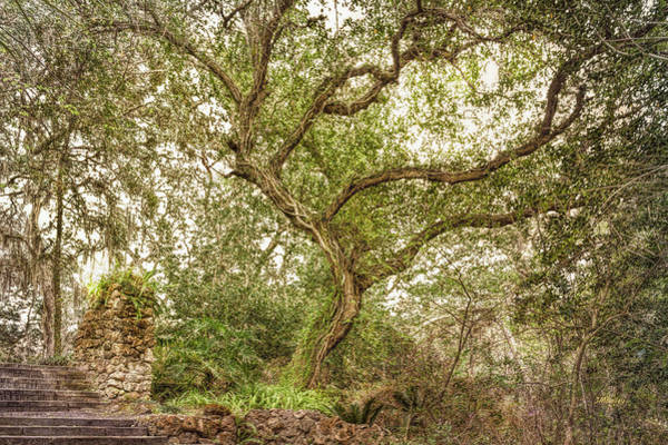 Photograph - Branching Out by John M Bailey