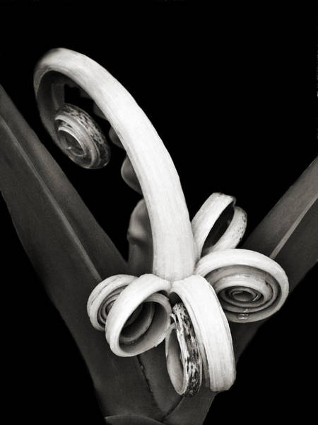 Photograph - Brand New Agave by Marilyn Hunt