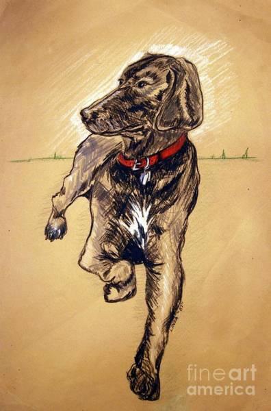 German Shepherd Drawing - Brandy by Linda Simon