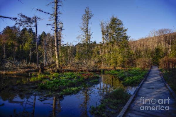 Photograph - Braodwalk Running Through The Bogs by Dan Friend