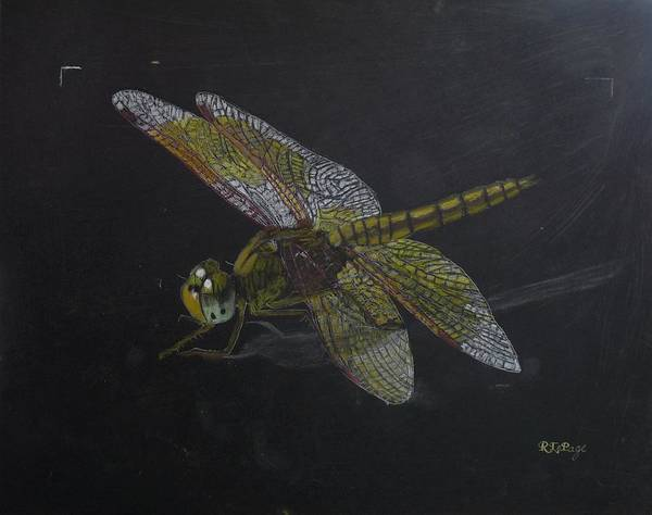 Pastel - Brass Dragonfly by Richard Le Page