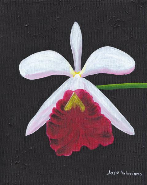 Painting - Brassalove Nodosa-rosita by M Valeriano