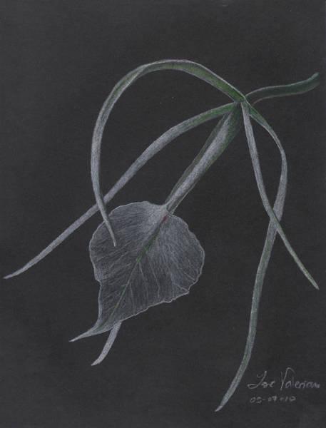 Pastel - Brassalove Nordosa Orchid by M Valeriano