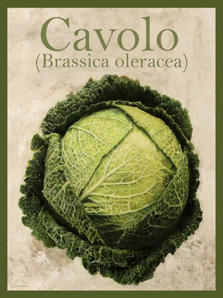 Arte Painting - Brassica Oleracea by Guido Borelli