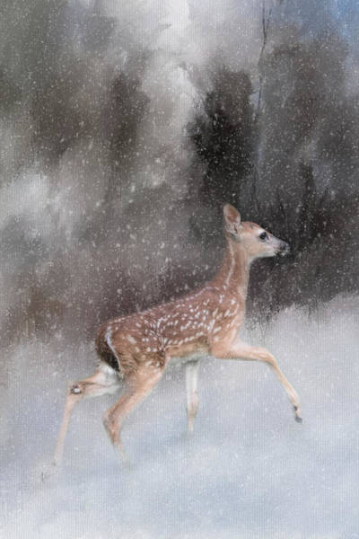 Photograph - Braving Her First Snow - Whitetail Deer Fawn Art By Jai Johnson by Jai Johnson
