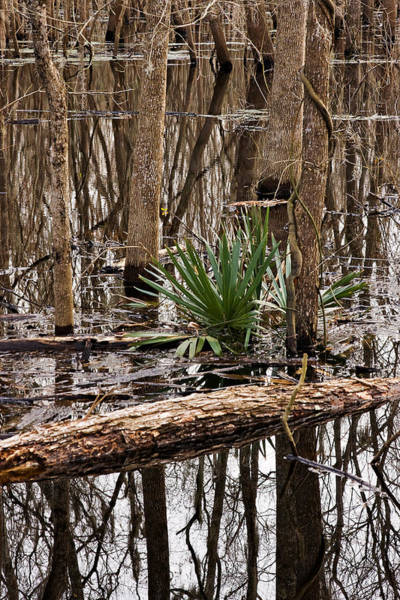 Brazos Bend State Park Wall Art - Photograph - Brazos Bend Swamp In Winter by Louise Heusinkveld
