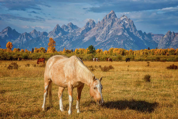White Horse Photograph - Breakfast In The Tetons by Darren White