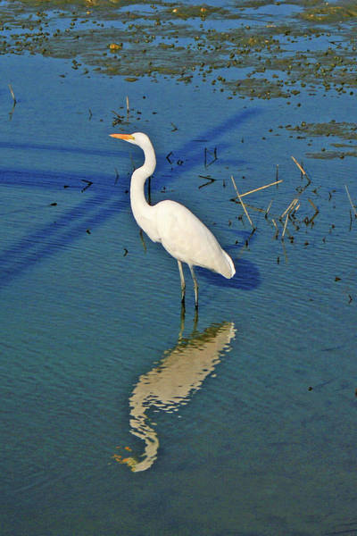 Photograph - Breakfast Time Along The Inlet by Bill Barber
