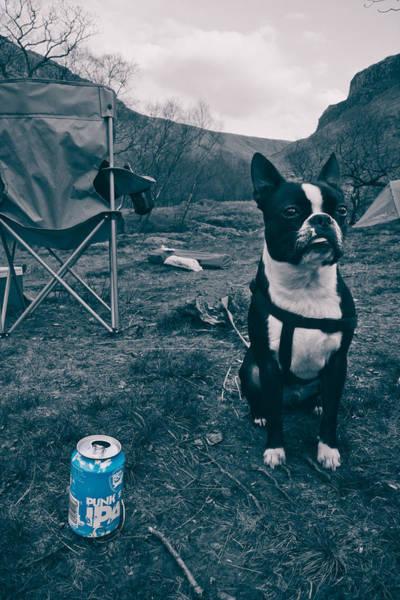 Puppies Photograph - Brewdog Bull by Justin Albrecht