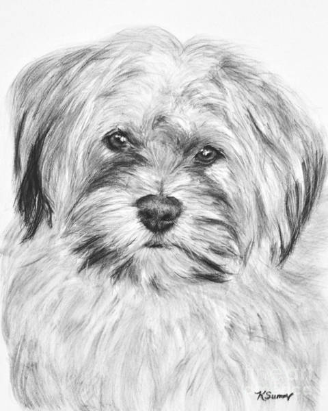Drawing - Brewser The Shih Tzu by Kate Sumners