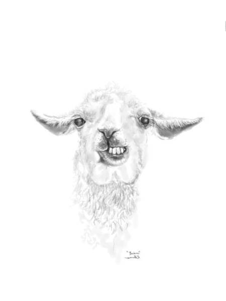 Llama Drawing - Brian by K Llamas