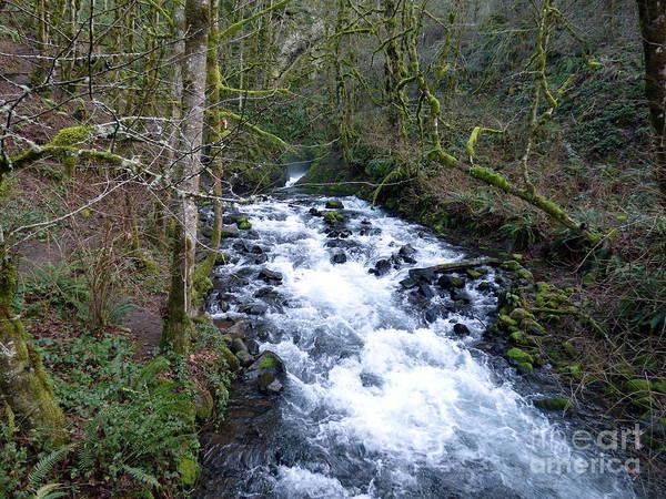 Photograph - Bridal Veil Creek Below The Falls by Charles Robinson