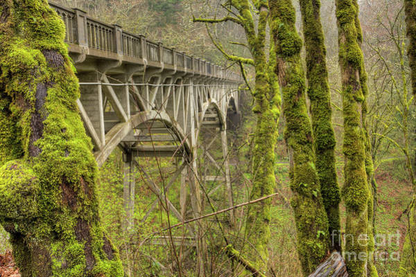 Moss Green Photograph - Bridge At Latourell Falls Oregon by Dustin K Ryan