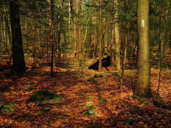 Photograph - Bridge In The Woods by Raymond Salani III