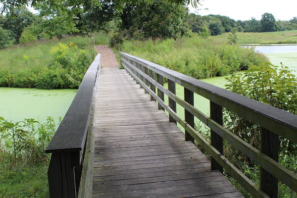 Wall Art - Photograph - Bridge Over Green Waters by Weathered Wood