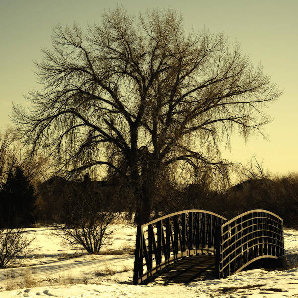 Photograph - Bridge To Tree by Marilyn Hunt
