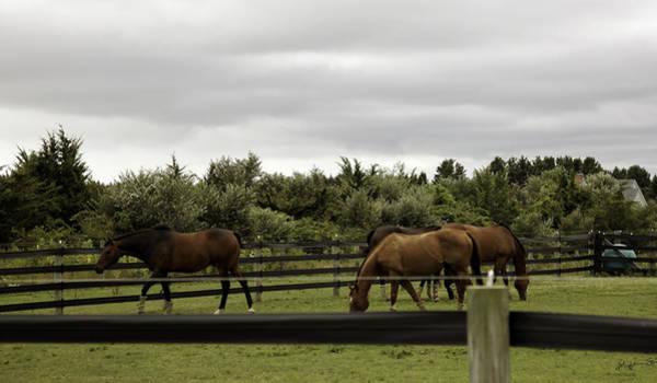 Wall Art - Photograph - Bridgehampton Horses by Madeline Ellis
