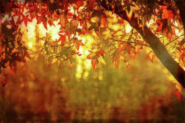 Wall Art - Digital Art - Bright Autumn Magic by Terry Davis