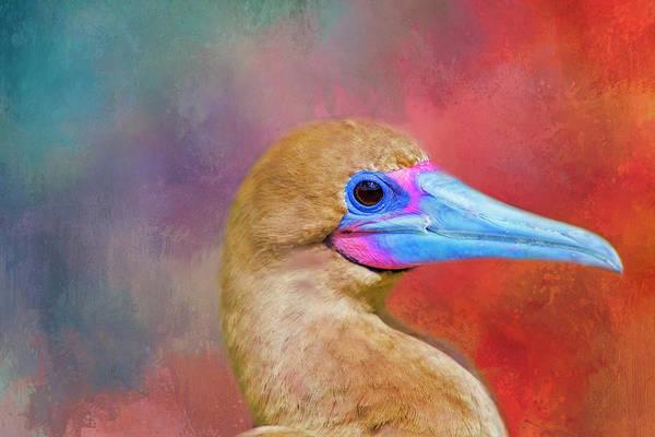 Boobies Digital Art - Bright Beak by Terry Davis