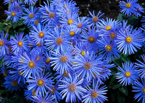 Photograph - Bright Blue by Tom Potter
