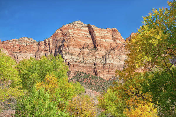 Photograph - Bright Colors At Zion by John M Bailey