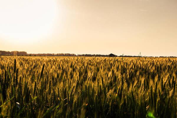 Vegetal Photograph - Bright by Chris Thodd