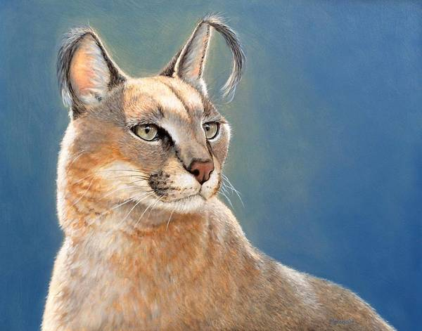 Painting - Bright Eyes - Caracal by Linda Merchant