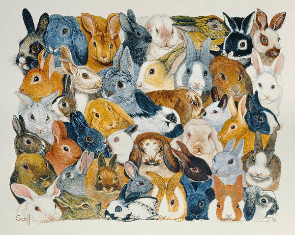 Ears Painting - Bright Eyes by Pat Scott