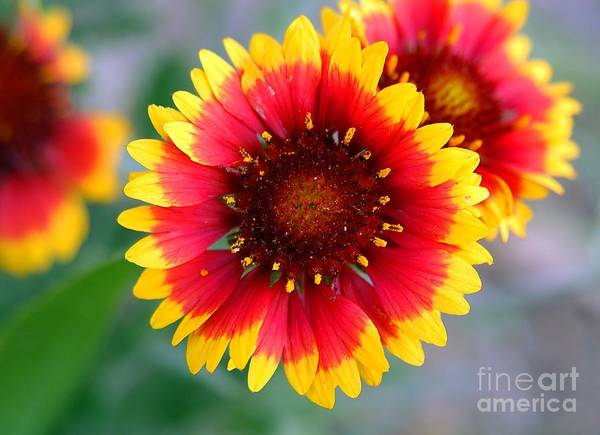 Photograph - Bright Floral Day by Clayton Bruster